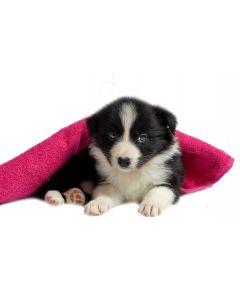 Paket PINKY - Pasji mladiček majhne do srednje velike pasme