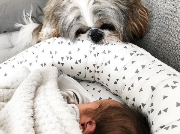 Kuža in prihod novorojenčka v dom
