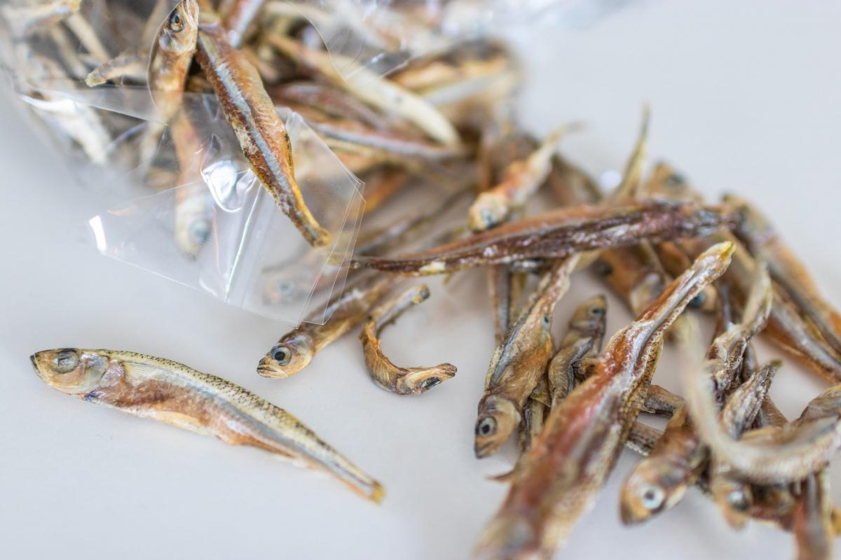 Zakaj so sušene ribice zdrave za kužke in muce?