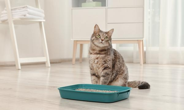 Mačje stranišče in učenje uporabe
