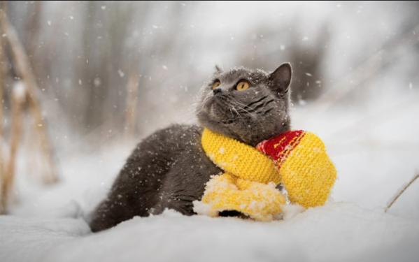 Letni časi za vašo muco: Zima ali poletje?