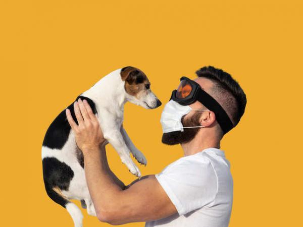Koronavirus in živali - najbolj pogosta vprašanja