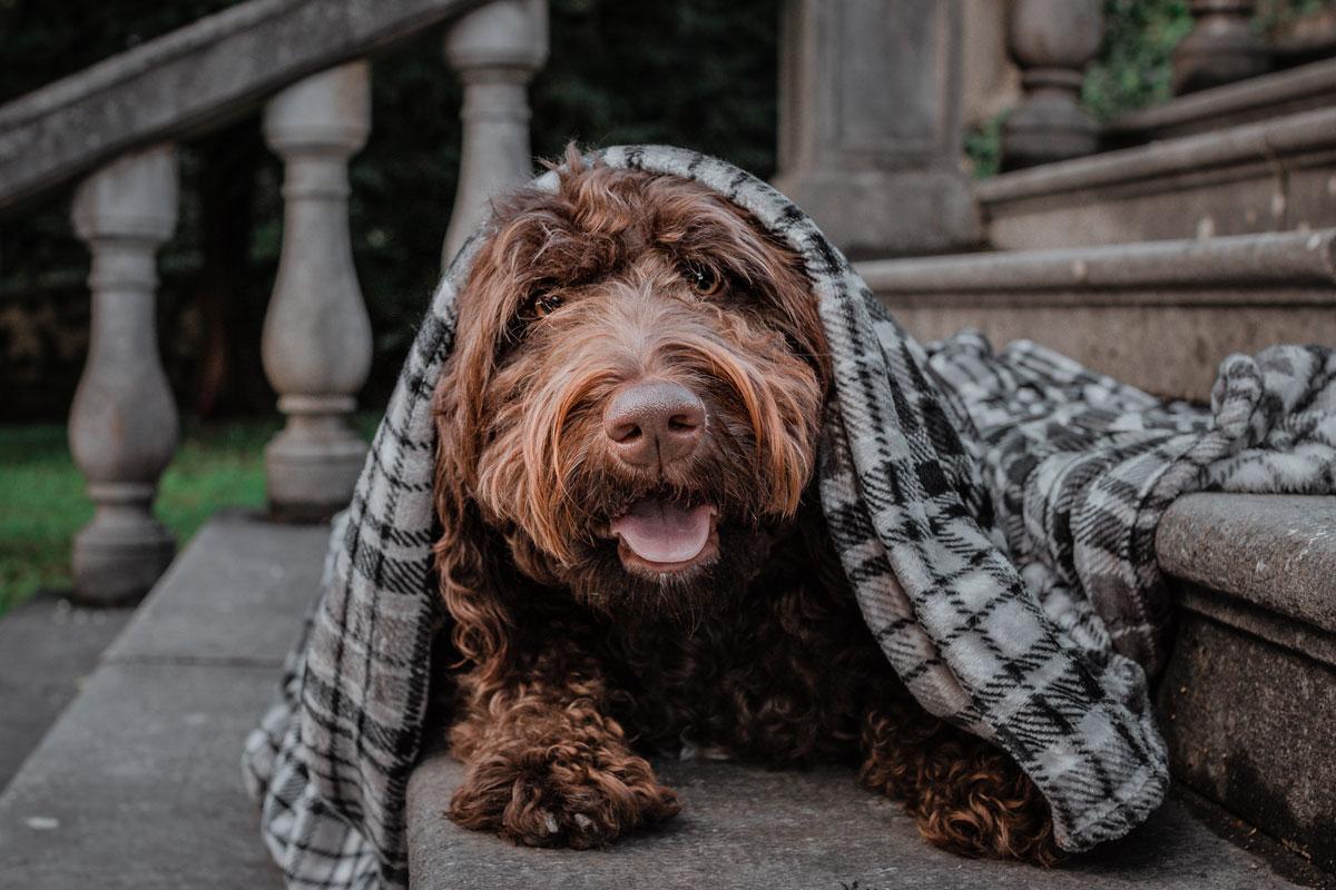 Kužni kašelj pri psu: Ga znam prepoznati?