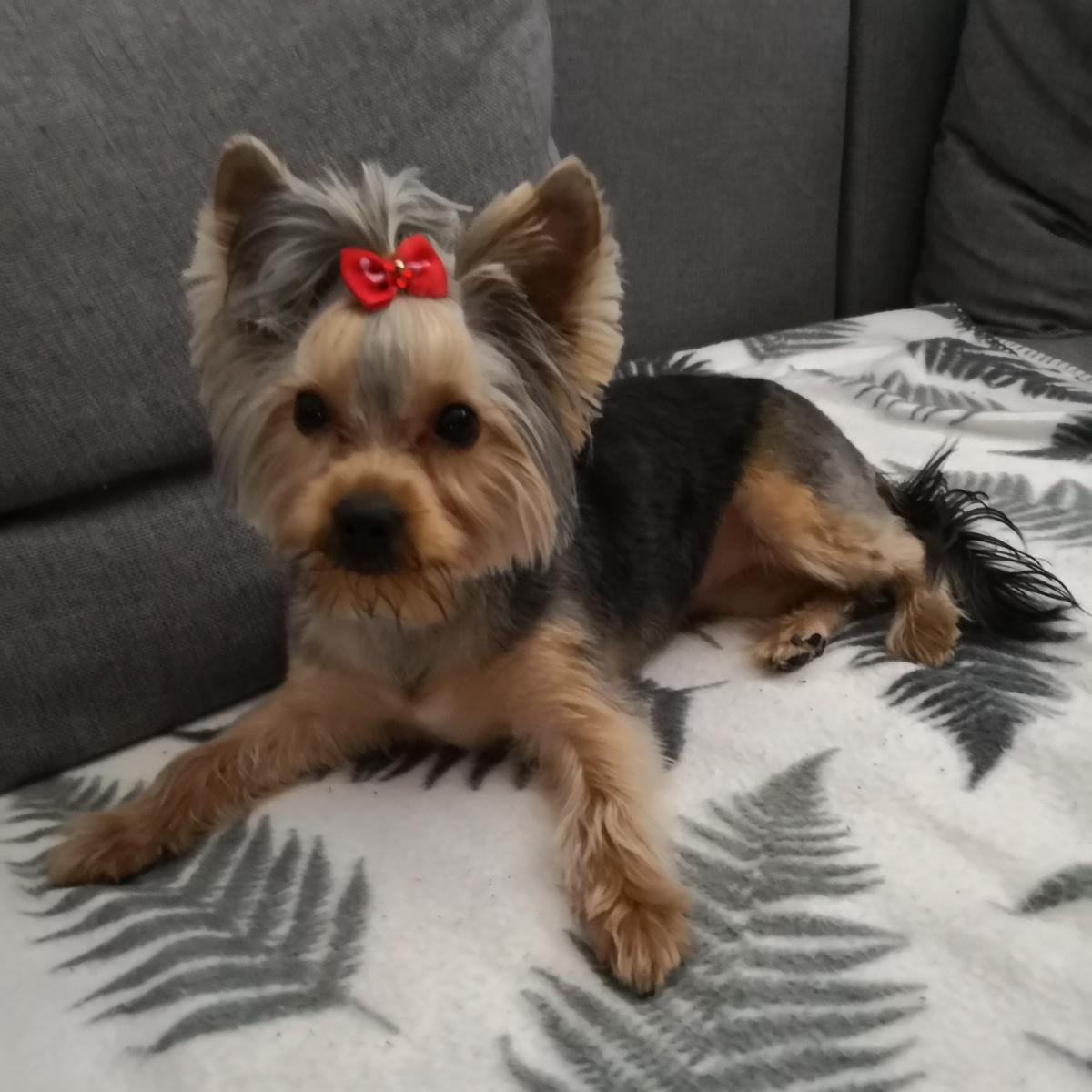 Loving Paw kuža meseca novembra: Borka Elly