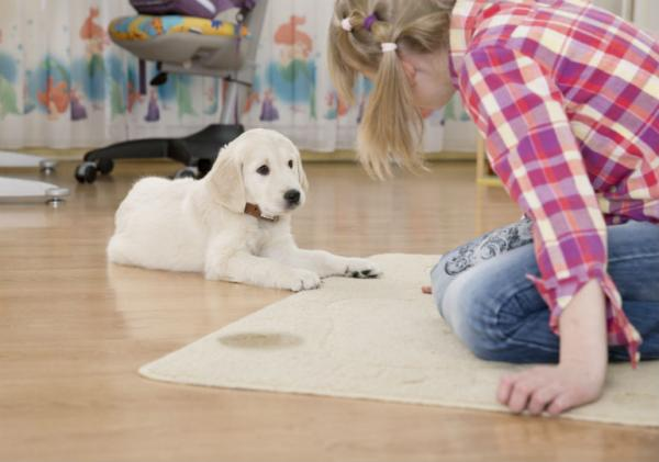 Navajanje mladička na sobno čistočo
