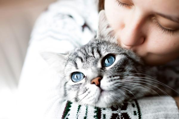 5 dejstev, ki jih morda niste vedeli o mački