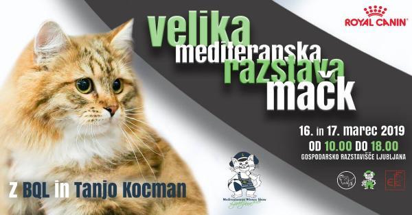 PRIHAJA: Velika mediteranska razstava mačk v Ljubljani