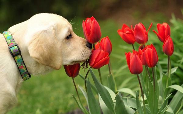 Katere so nevarne zunanje in sobne rastline za psa?