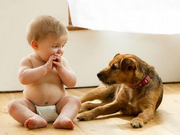 6 zlatih pravil za varnost otroka in srečnega kosmatinčka