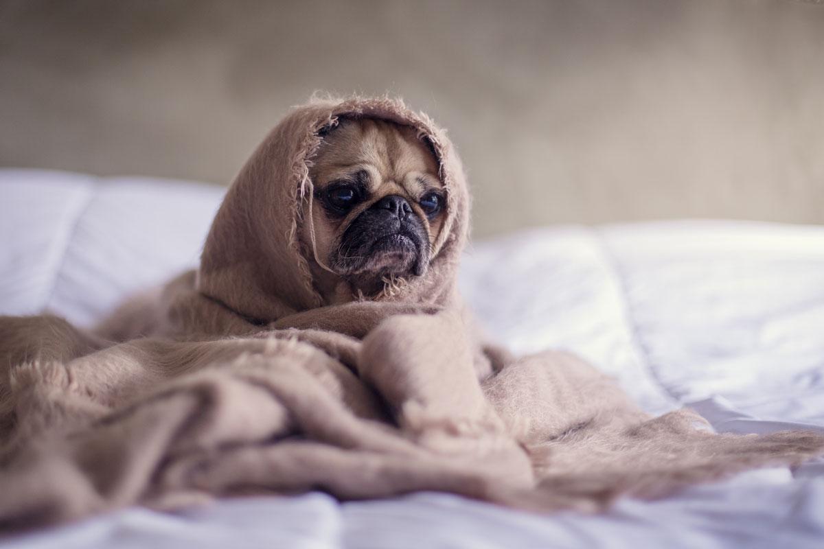 Kako lahko psu izmerim temperaturo?