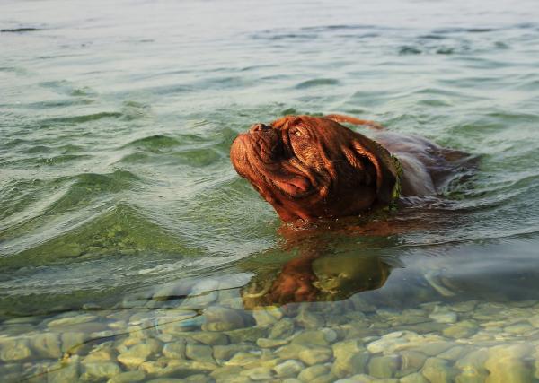 Vaši kužki radi plavajo?