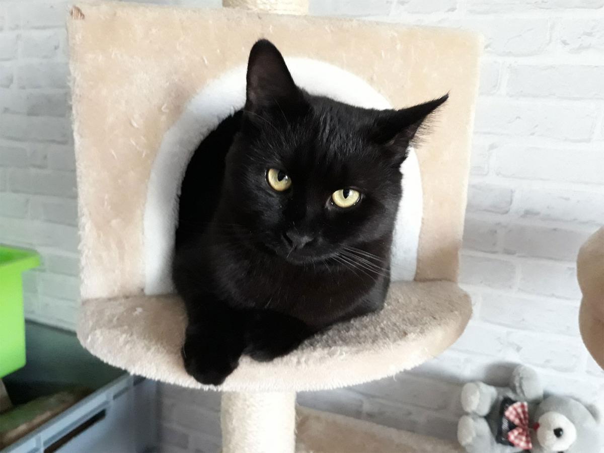 Loving Paw muca januarja: Črni lepotko Mišek