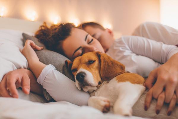 Pes v postelji: da ali ne?