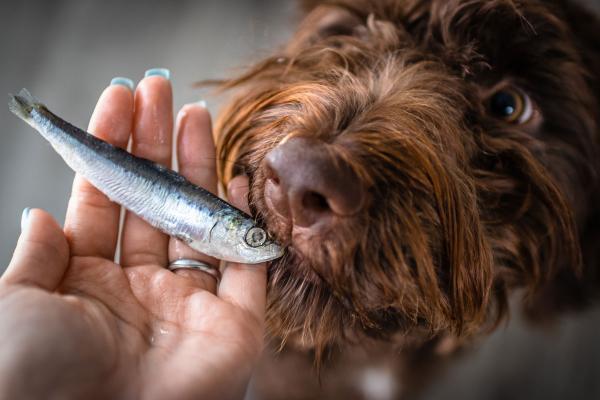 Maščobne kisline Omega 3: Jih ima moj pes dovolj?