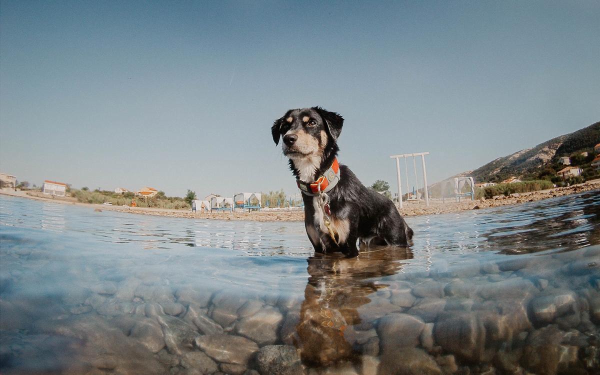 Poletje in vročina: Kako ohladiti kužka ali muco?