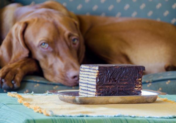 Zakaj čokolada res ni primerna za psa?
