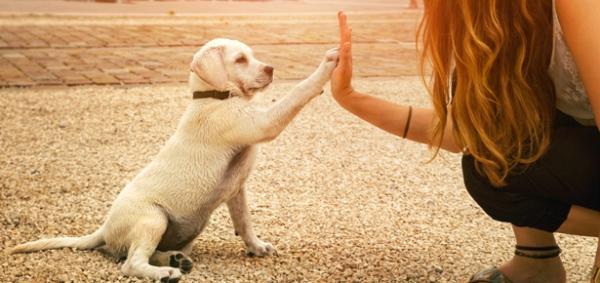 Pasja šola: Kako se odločiti za pravo?