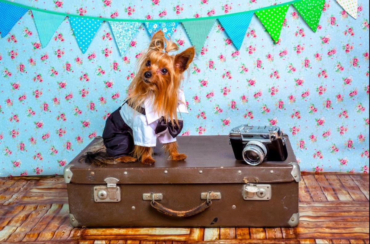Pes in letalo: kako potovati brez težav?