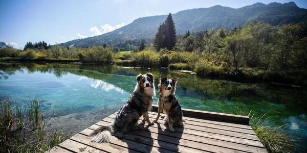 Čudovit video predstavi Slovenijo kot raj za pse