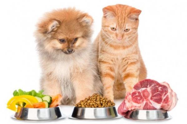 3 razlogi, zakaj si kuža in muca ne smeta deliti hrano