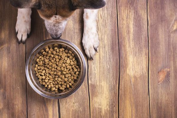 Pogosti alergeni v pasji hrani