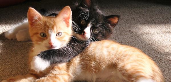 5 fascinantnih dejstev o mačkah
