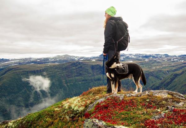 S psom v hribe