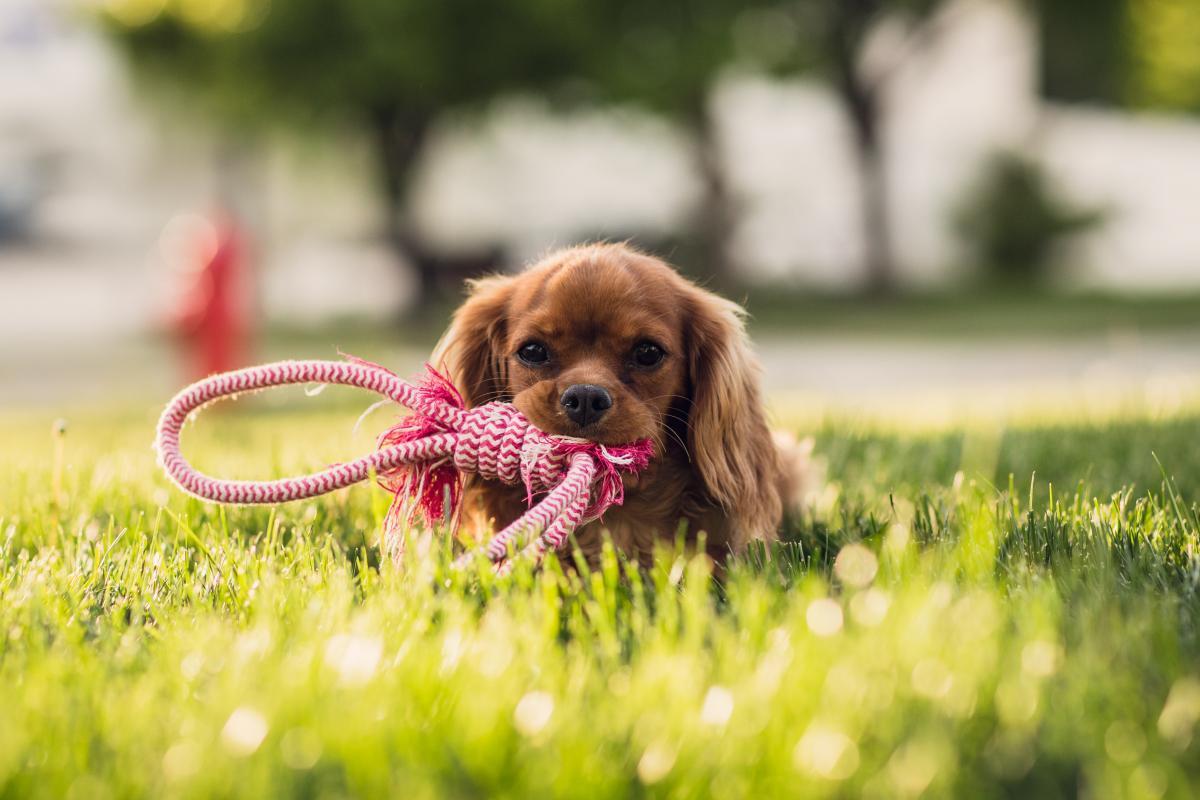 Ustvarjamo doma: igrače za pse