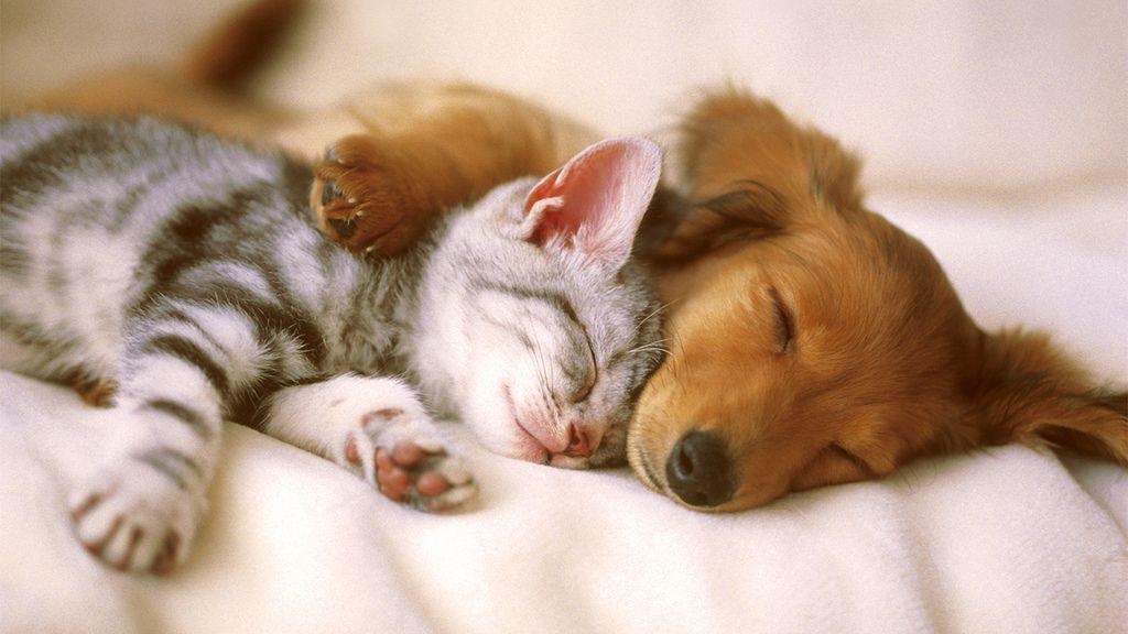 Zanimiva dejstva o pasjih in mačjih mladičih