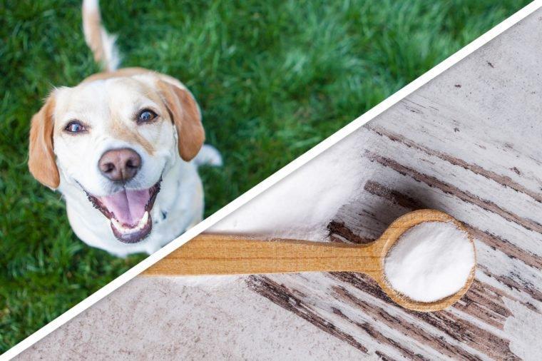 Pes in soda bikarbona: rešitev za marsikatero težavo