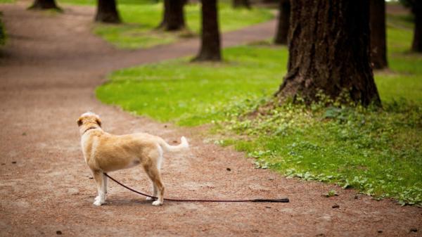 Vaš pes se je na dopustu izgubil: Kaj storiti?