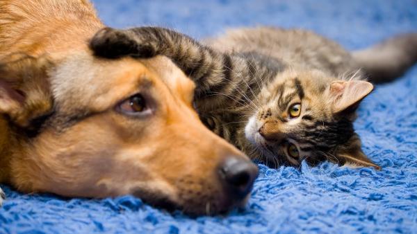 Skupno domovanje psov in mačk - kdo je ''glavni'' ?