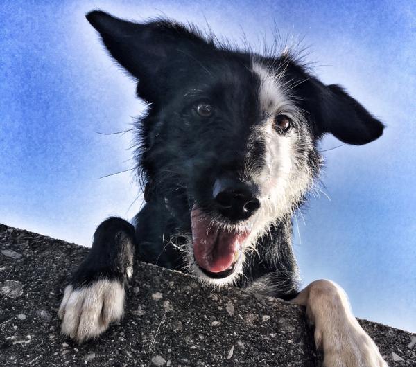 Loving Paw kuža meseca avgusta: Prelepa Rita