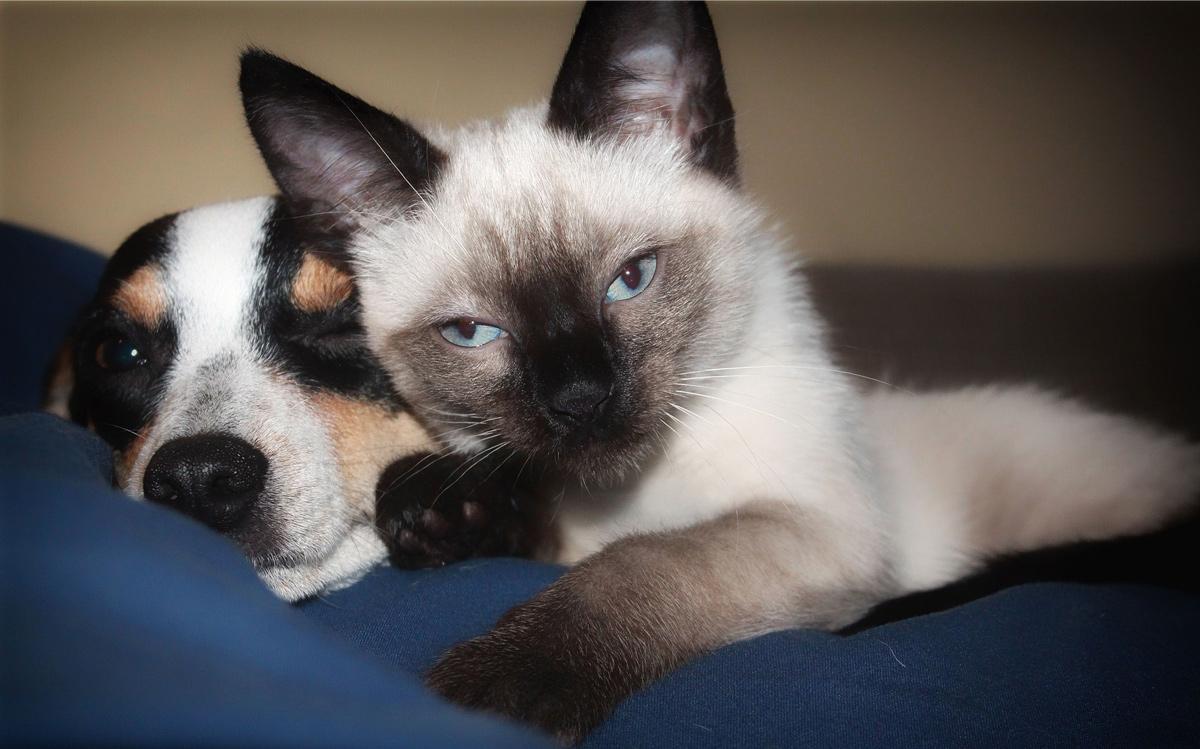 Zakaj psi in mačke ne živijo večno?