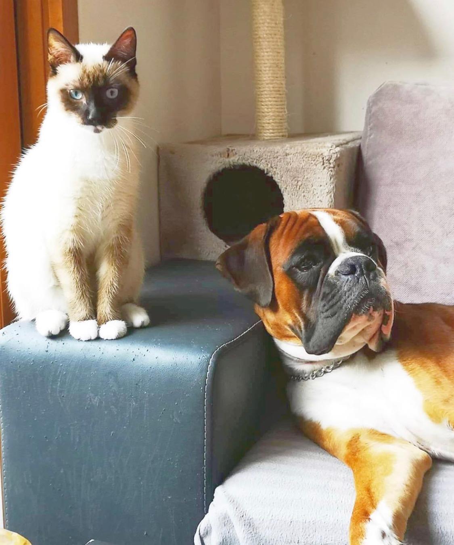 Mačka in pes skupaj v stanovanju? Seveda! :)