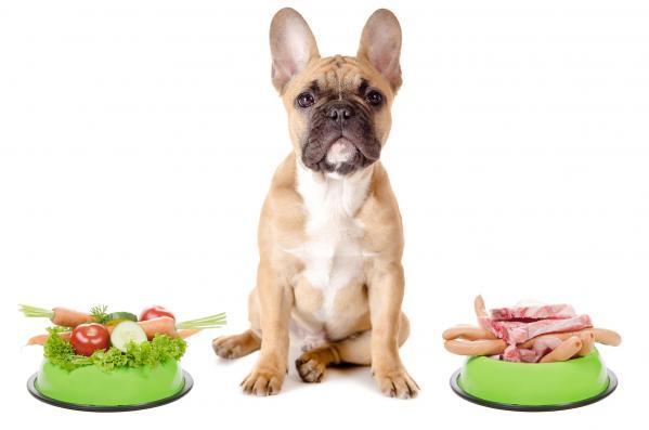 Kako najti pravo hrano za psa?