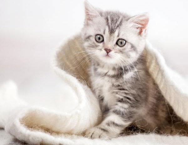 Kakšna hrana je najboljša za mačje mladičke?