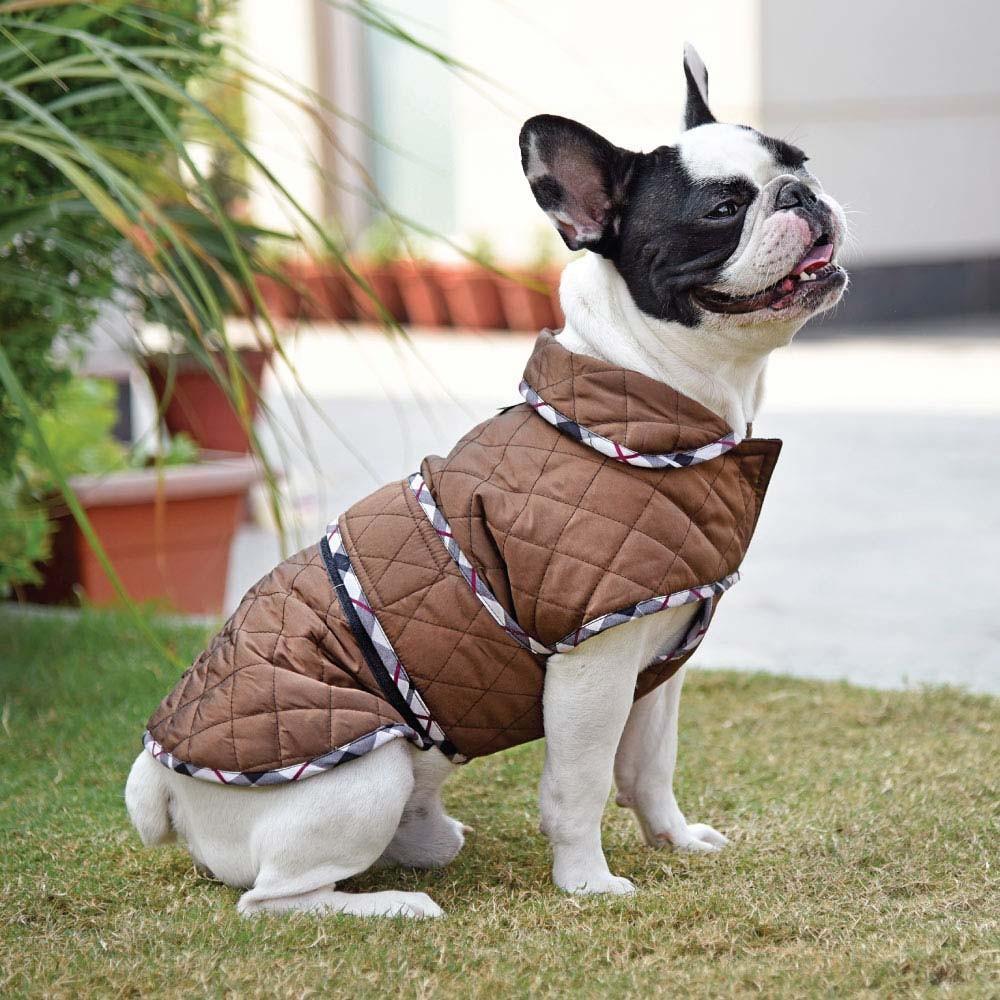 Pasja oblačila: Da ali ne? Kako jih izbrati?
