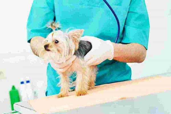 Artritis in aromaterapija