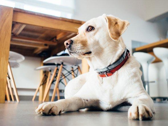 Kako ugotoviš, ali te tvoj pes nadzira?