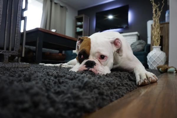 Miritveni signali pri psu