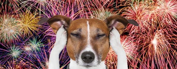 Kako omiliti strah vašega kužka med novoletnim pokanjem?
