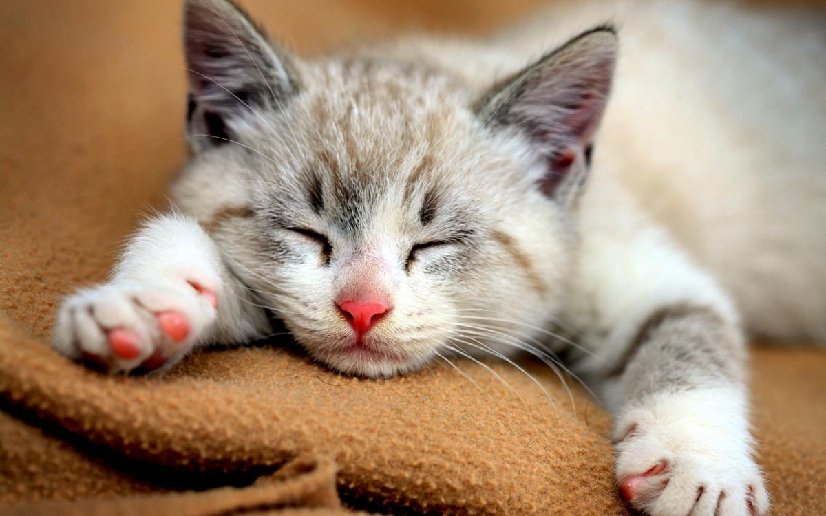 10 zanimivih dejstev o mačkah