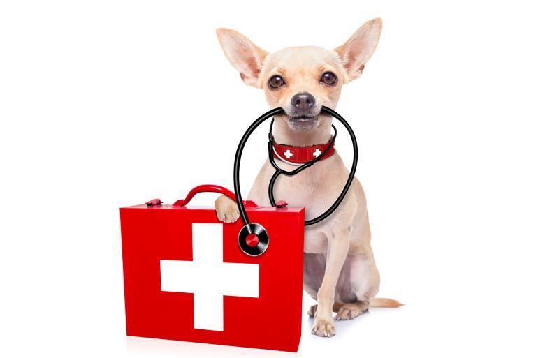 Preprost test: Je tvoj kuža zdrav?