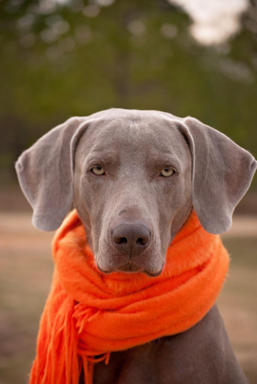 dog-1121623_1280.jpg