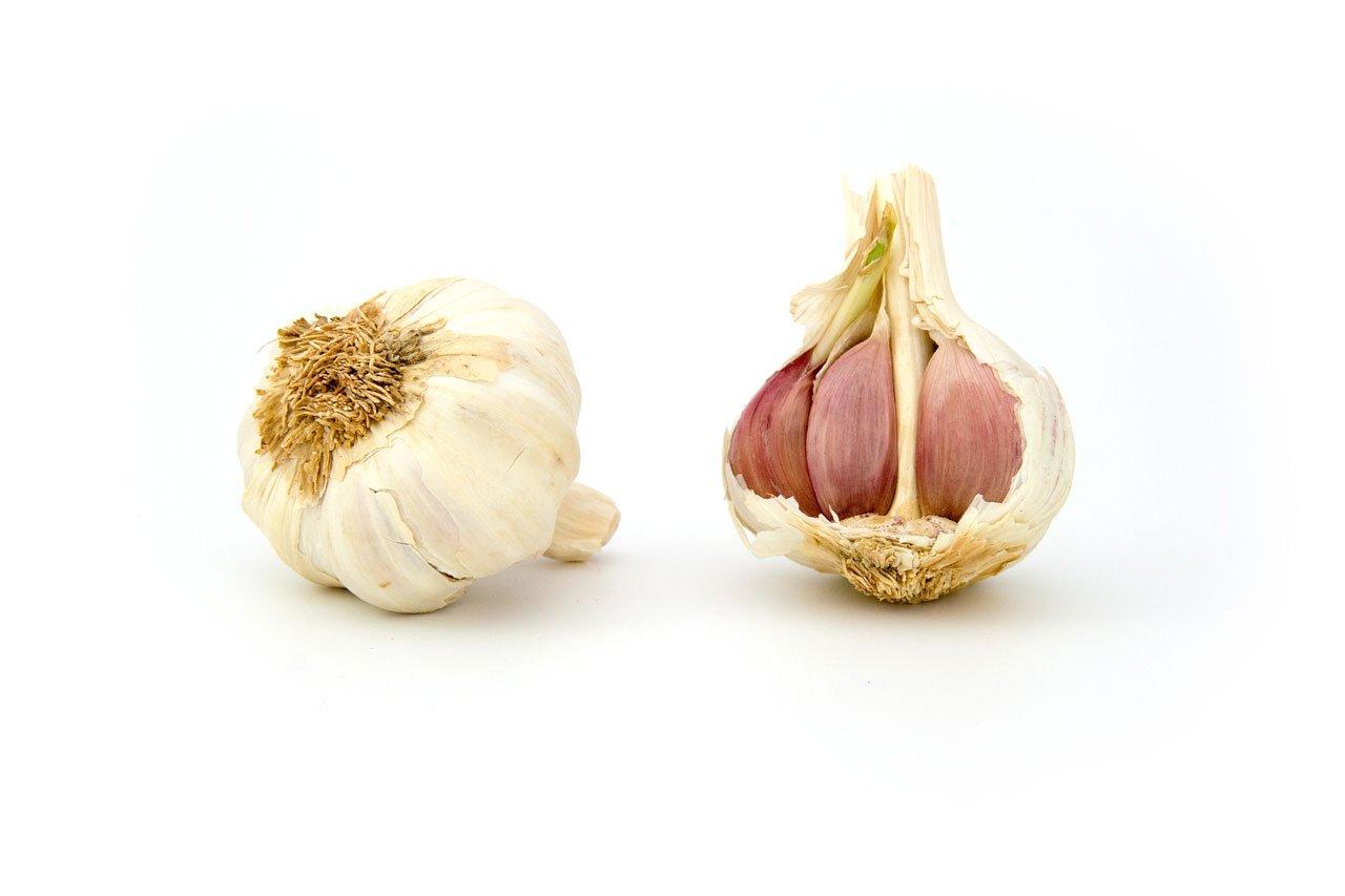 garlic-1808.jpg