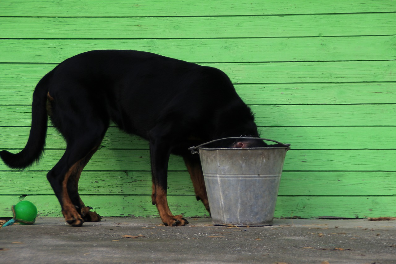 bucket-999973_1280.jpg