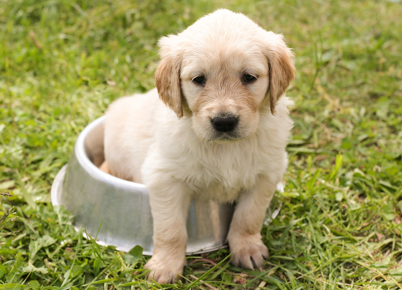 puppy-1207816_1280