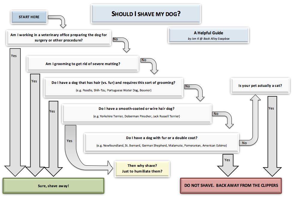 Bi pobril svojega psa?